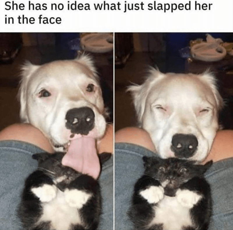 Dog breed - She has no idea what just slapped her in the face