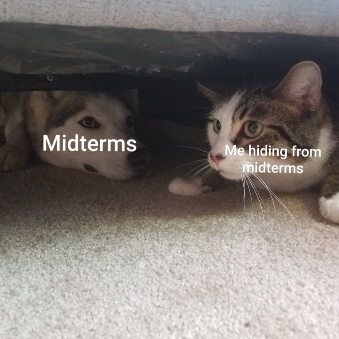 Cat - Midterms Me hiding from midterms
