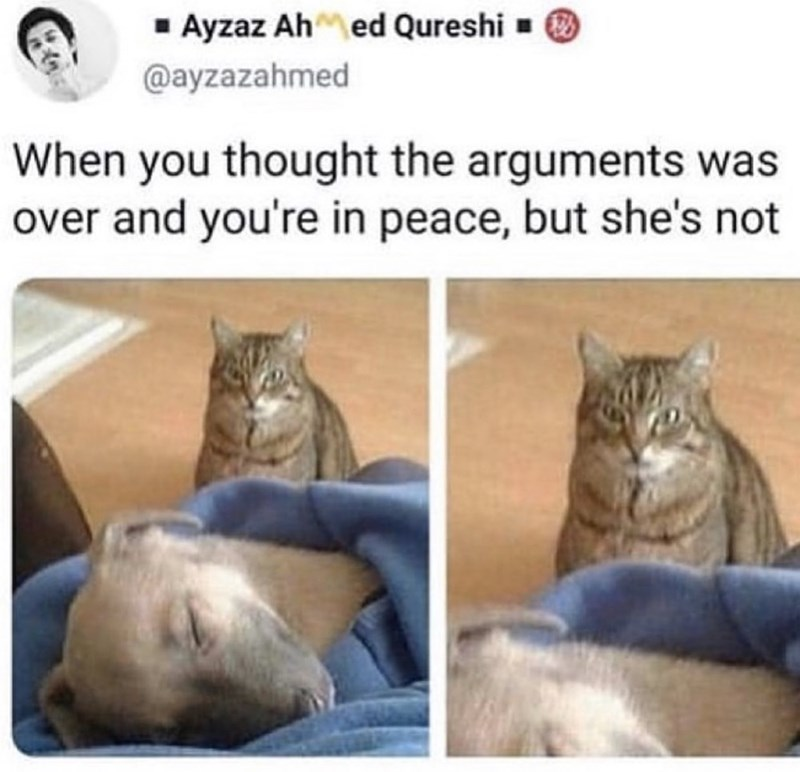 Cat - 1 Ayzaz Ah ed Qureshi - @ayzazahmed When you thought the arguments was over and you're in peace, but she's not