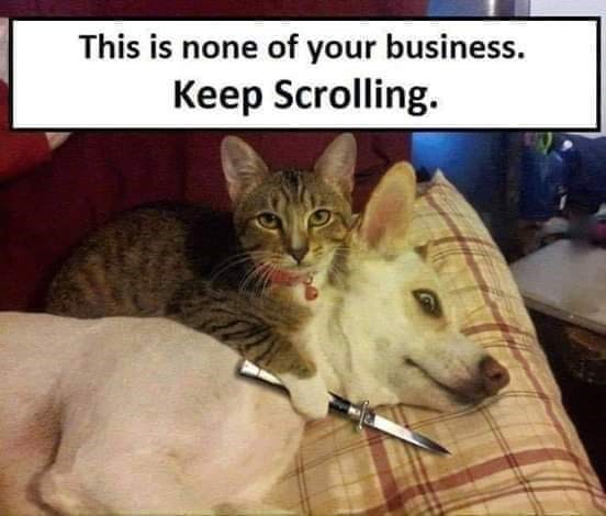 Cat - This is none of your business. Keep Scrolling.