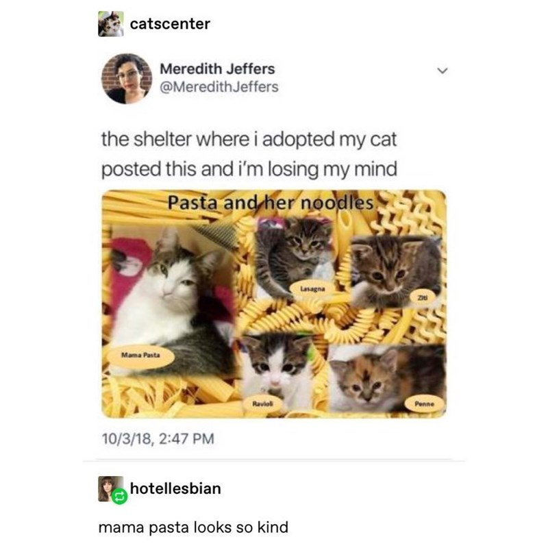 Text - catscenter Meredith Jeffers @MeredithJeffers the shelter wherei adopted my cat posted this and i'm losing my mind Pasta and her noodles Lasagna Mama Pasta Ravloli Penne 10/3/18, 2:47 PM hotellesbian mama pasta looks so kind >