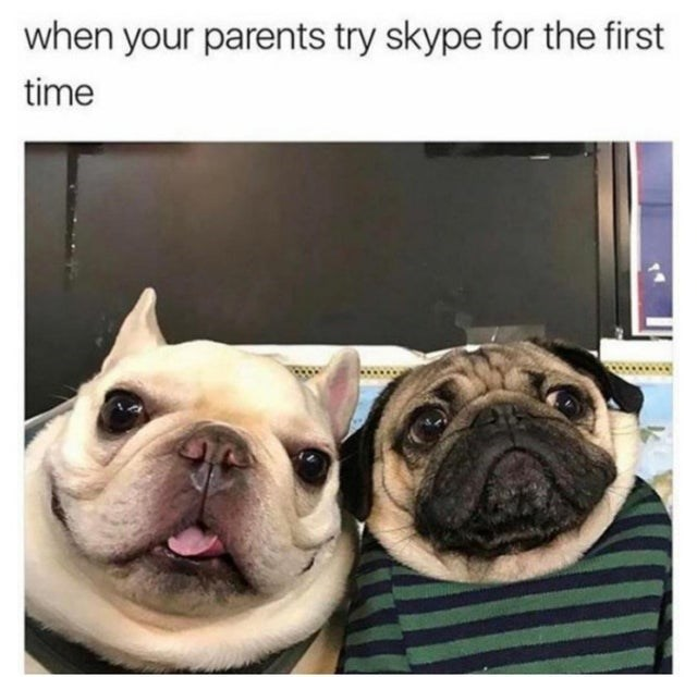 Pug - when your parents try skype for the first time
