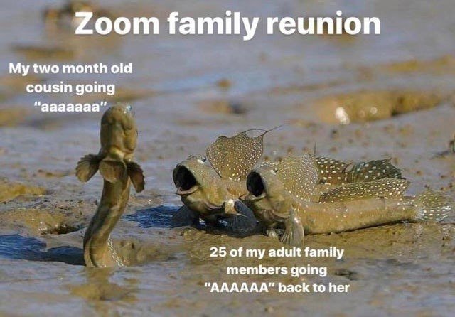 """Saltwater crocodile - Zoom family reunion My two month old cousin going """"aaaaaaa"""" 25 of my adult family members going """"AAAAAA"""" back to her"""