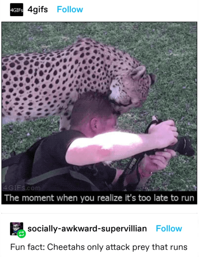 Jaguar - 4GIFS 4gifs Follow 4GIFS.com The moment when you realize it's too late to run socially-awkward-supervillian Follow Fun fact: Cheetahs only attack prey that runs Nikon