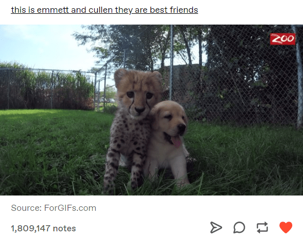 Mammal - this is emmett and cullen they are best friends 200 Source: ForGlIFs.com > D 1,809,147 notes