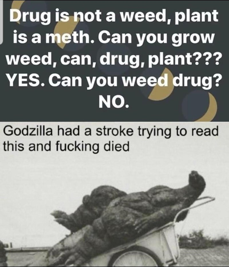 Text - Drug is not a weed, plant is a meth. Can you grow weed, can, drug, plant??? YES. Can you weed drug? NO. Godzilla had a stroke trying to read this and fucking died
