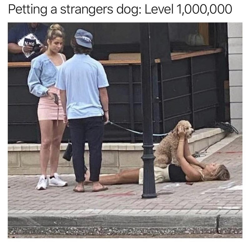 funny memes, memes, funny, dogs, pets | Petting a strangers dog: Level 1,000,000 woman lying on the pavement with a dog