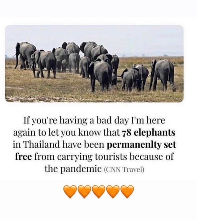Elephant - If you're having a bad day I'm here again to let you know that 78 elephants in Thailand have been permanenlty set free from carrying tourists because of the pandemic (CNN Travel)