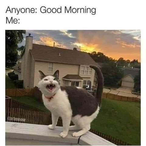 Cat - Anyone: Good Morning Me: atmeow