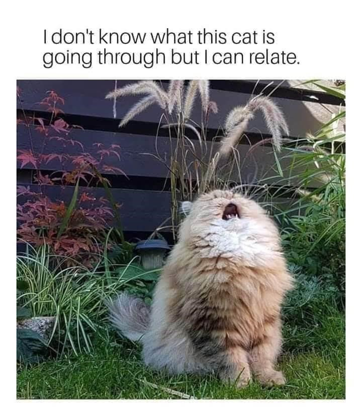 Cat - I don't know what this cat is going through but I can relate.