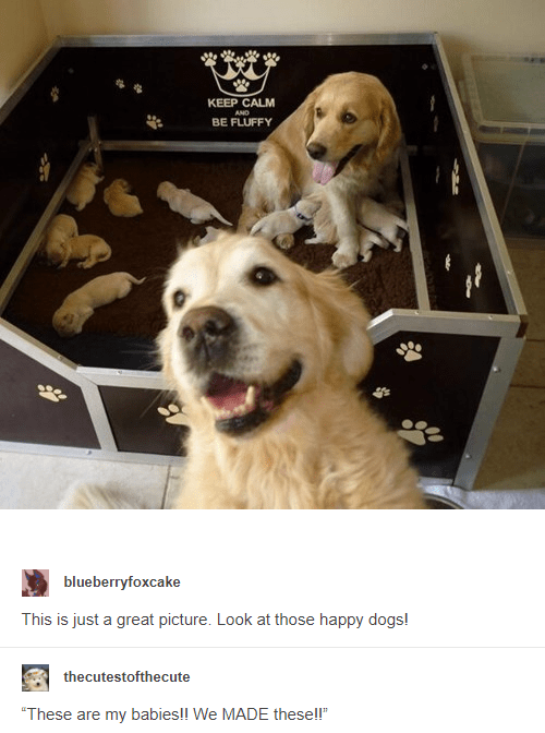 blUeberryfoxc.ake This is just a great picture. Look at those happy dogs! thecutestofthecute These are my babies We MADE these | two smiling golden retrievers with newborn puppies