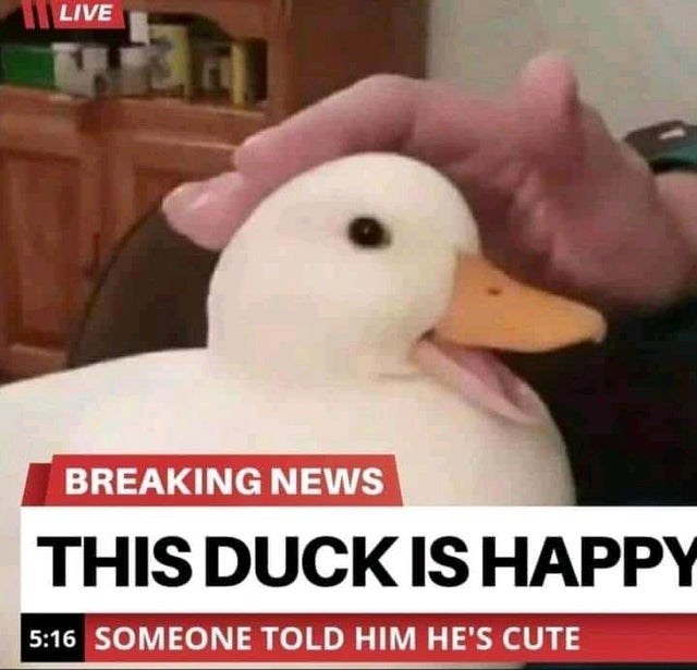 BREAKING NEWS THIS DUCK IS HAPPY 5:16 SOMEONE TOLD HIM HE'S CUTE