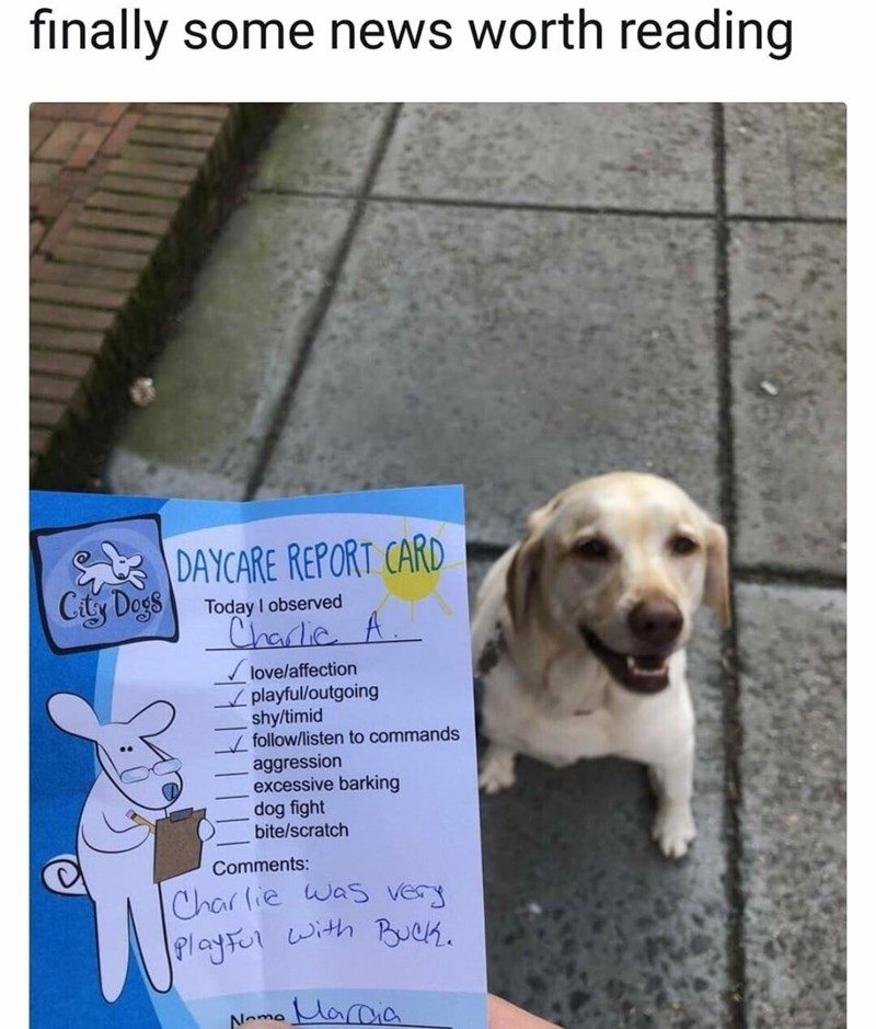 finally some news worth reading DAYCARE REPORT Today observed Charlie love/affection playful/outgoing shy/timid follow/listen to commands aggression excessive barking dog fight bite/scratch