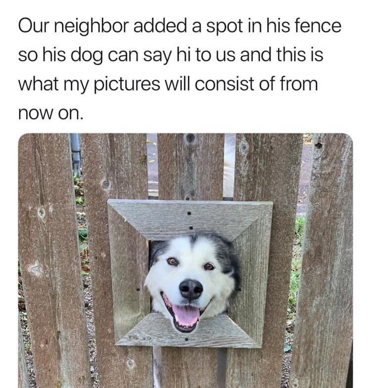 Canidae - Our neighbor added a spot in his fence so his dog can say hi to us and this is what my pictures will consist of from now on. 影 42保