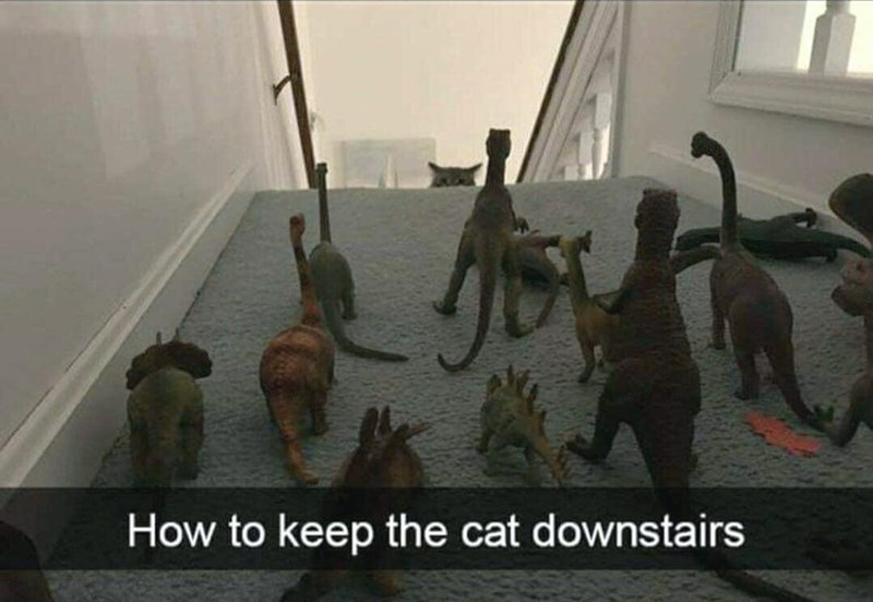 How to keep the cat downstairs