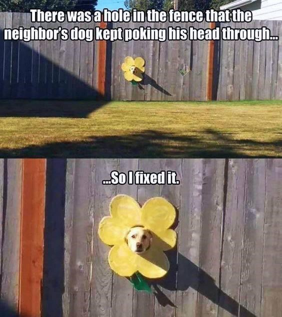Text - There was a hole in the fence that the neighbor's dog kept poking his head through. Solfixed it.