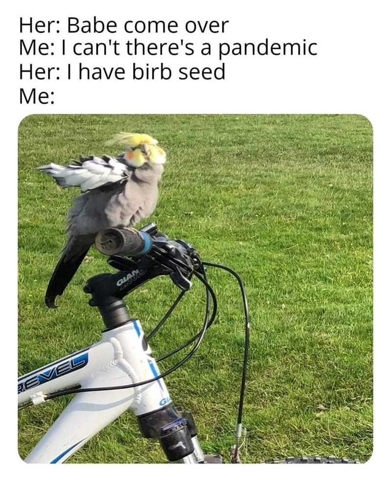 Grass - Her: Babe come over Me: I can't there's a pandemic Her: I have birb seed Мe: GLA