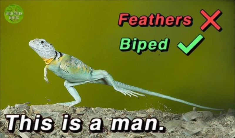 Lizard - Feathers X WILD GREEN MEMES Biped This is a man.