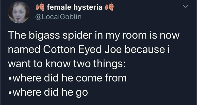 Text - $e female hysteria @LocalGoblin The bigass spider in my room is now named Cotton Eyed Joe because i want to know two things: •where did he come from •where did he go