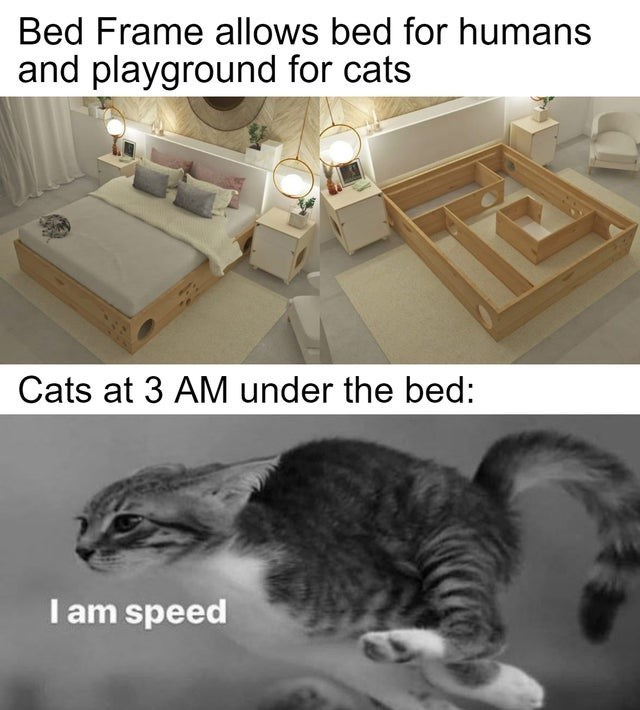 Cat - Bed Frame allows bed for humans and playground for cats Cats at 3 AM under the bed: I am speed