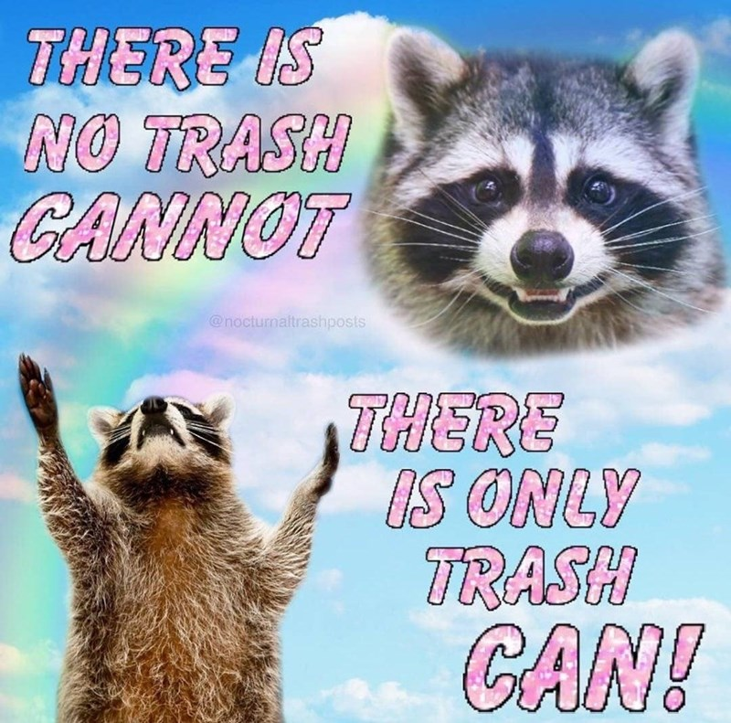 Procyon - THERE IS NO TRASH CANNOT @nocturnaltrashposts THERE IS ONLY TRASH CAN!