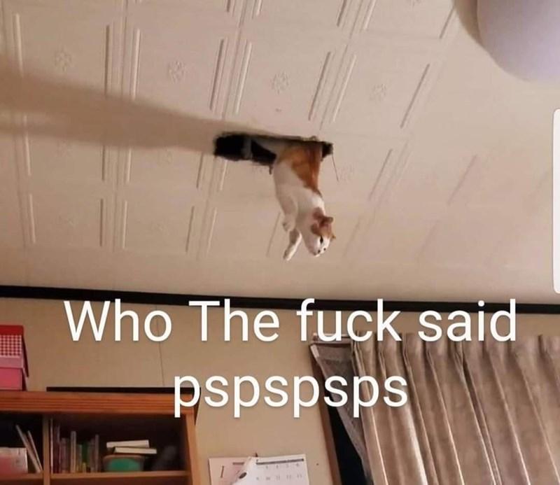 Wall - Who The fuck said sdsdsdsd