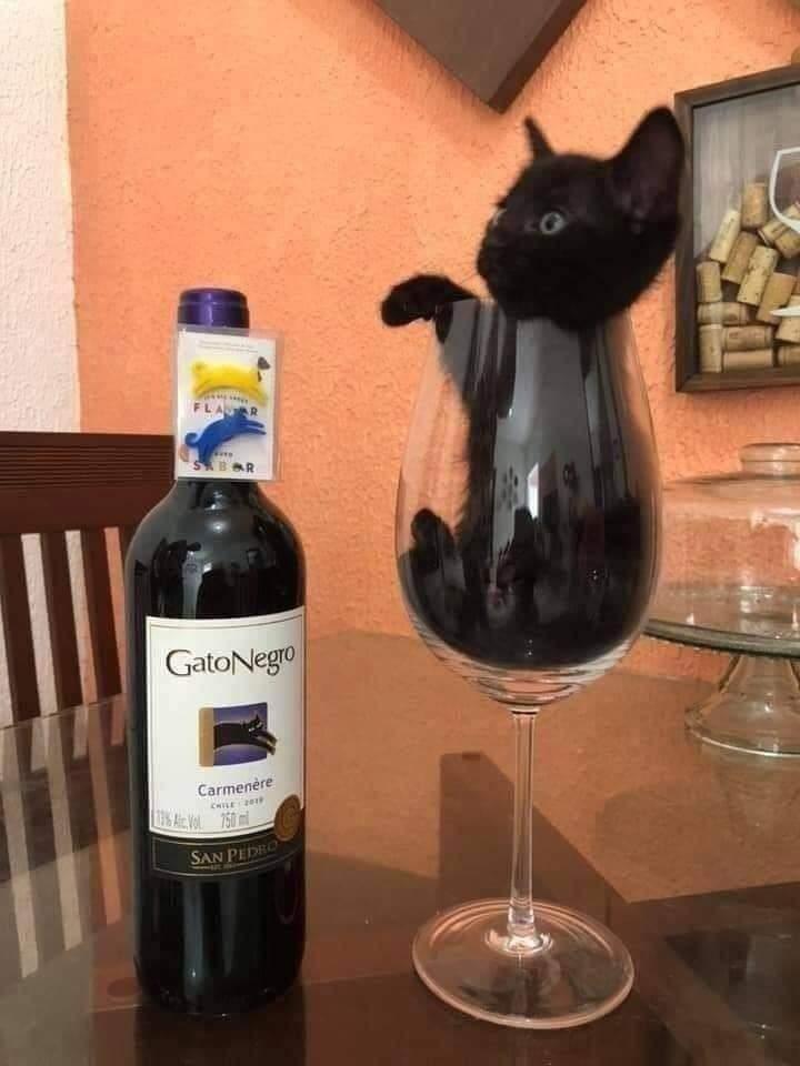 Bottle - LAR SBAR GatoNegro Carmenère CHILE A VOL 760 m SAN PEDRO