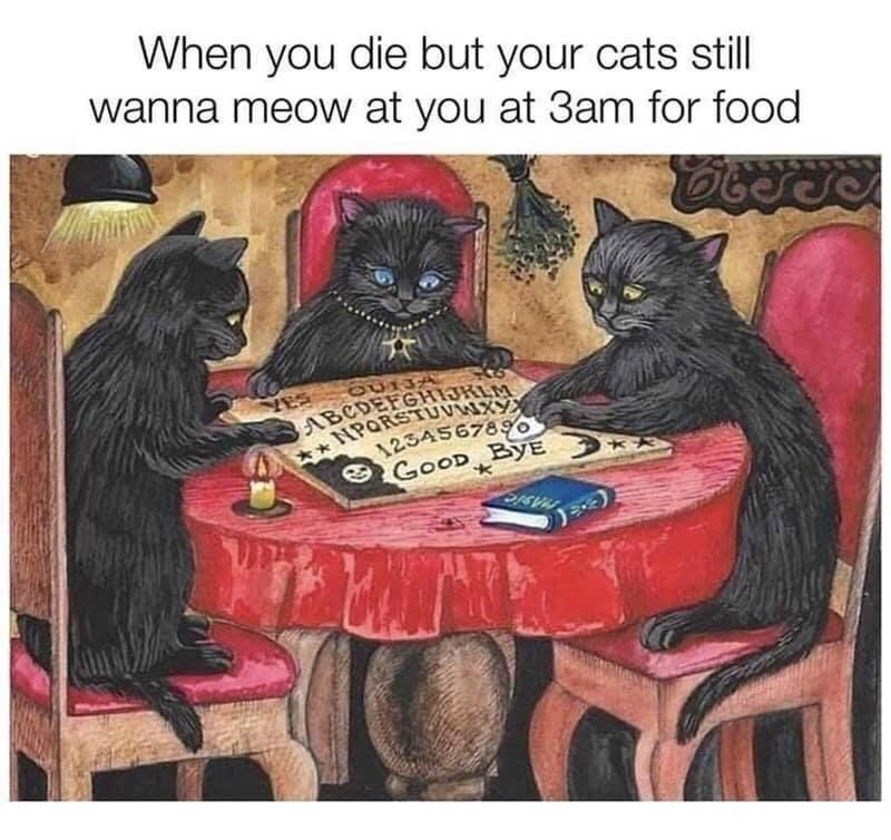Games - When you die but your cats still wanna meow at you at 3am for food ABCDEFGHIJKLM **NPORSTUVWXY 1234567896 O GOOD BYE