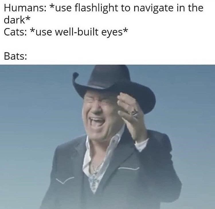Funny meme using the video for big enough, cowboy screaming, to explain how bats navigate in the dark | humans: use flashlight to navigate in the e dark Cats: use well-built eyes Bats: