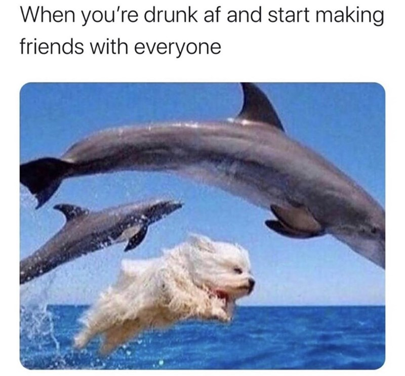 Bottlenose dolphin - When you're drunk af and start making friends with everyone