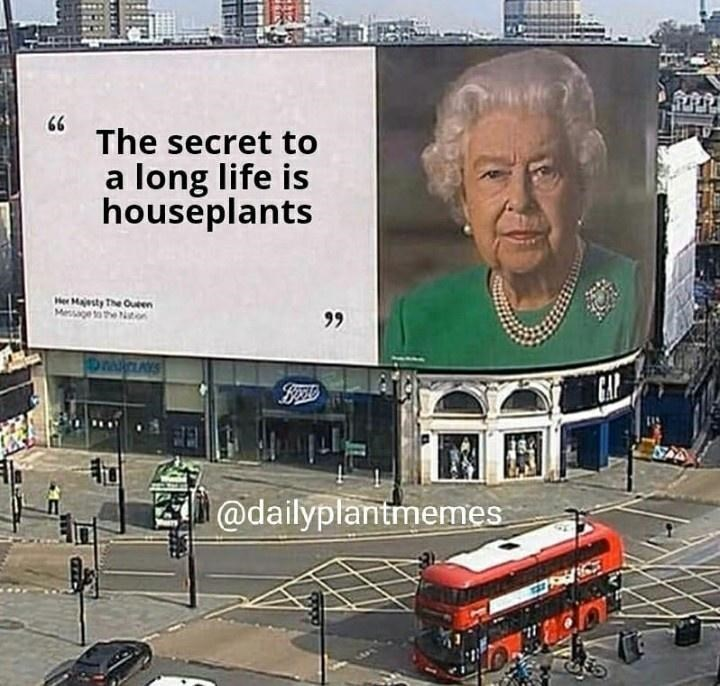 Billboard - 66 The secret to a long life is houseplants Her Majesty The Oueen Mersge tae ton 99 GAP @dailyplantmemes