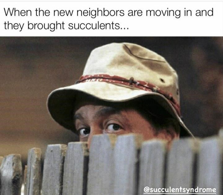 Facial expression - When the new neighbors are moving in and they brought succulents... @succulentsyndrome