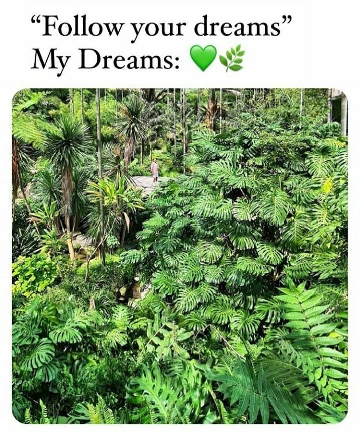 """Plant - """"Follow your dreams"""" My Dreams:"""