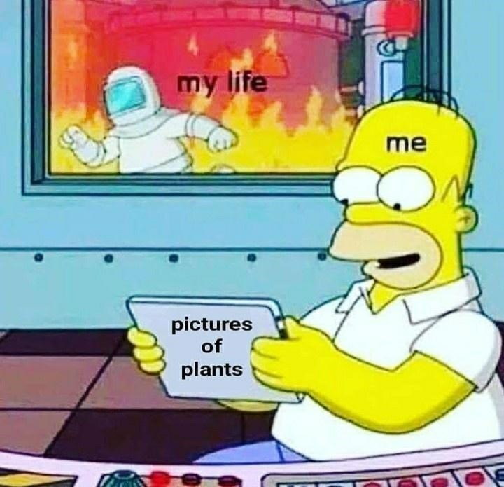 Cartoon - my life me pictures of plants