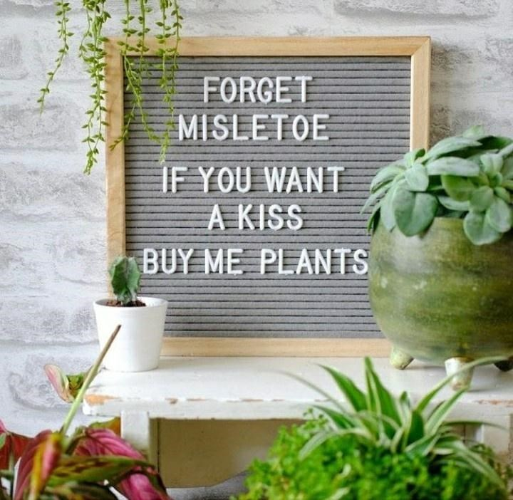 Green - FORGET MISLETOE IF YOU WANT A KISS BUY ME PLANTS