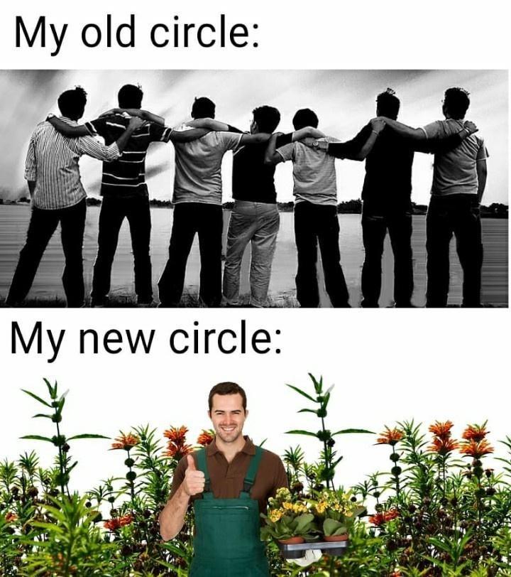 Plant - My old circle: My new circle: