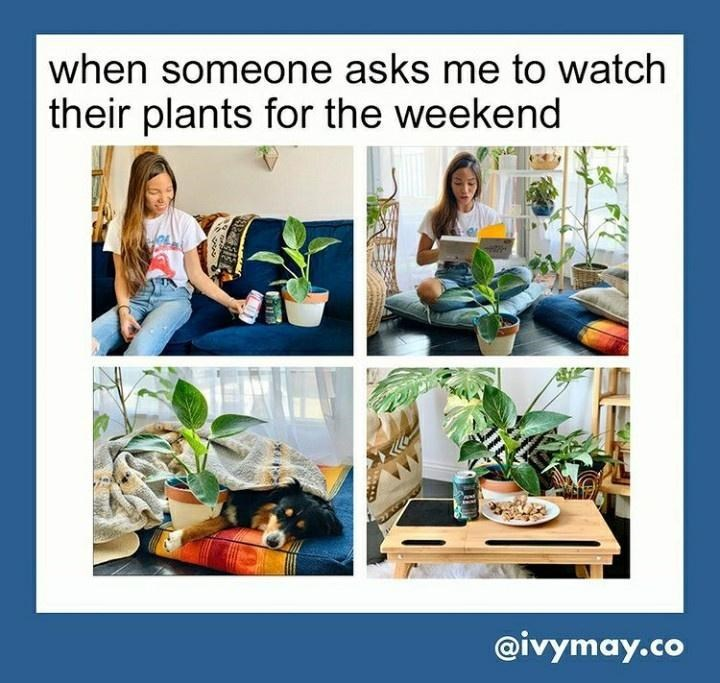 Product - when someone asks me to watch their plants for the weekend @ivymay.co