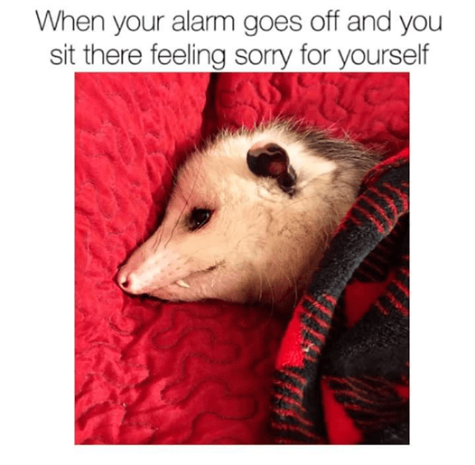 Possum - When your alam goes off and you sit there feeling sorry for yourself