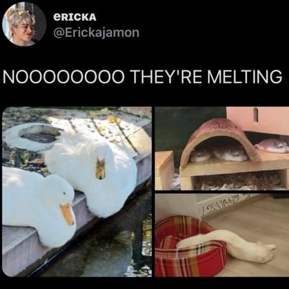 Design - ERICKA @Erickajamon NOO0000OO THEY'RE MELTING