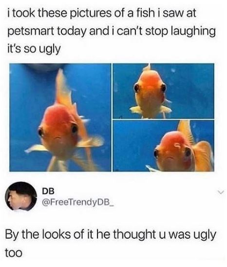 Fish - i took these pictures of a fish i saw at petsmart today and i can't stop laughing it's so ugly DB @FreeTrendyDB_ By the looks of it he thoughtu was ugly too