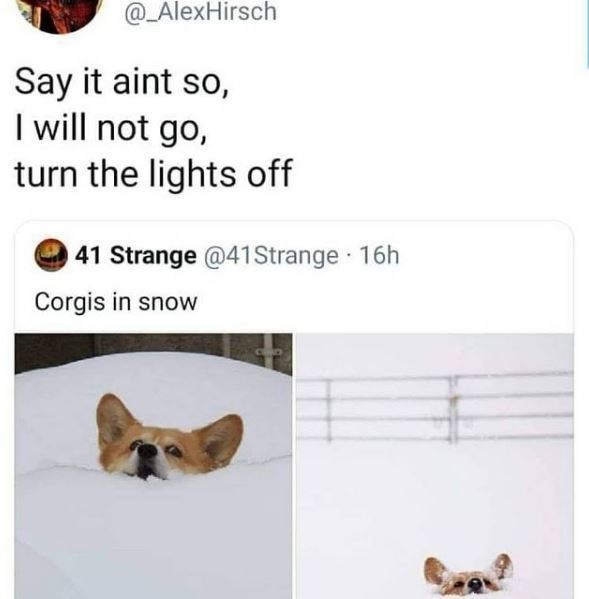 Text - @_AlexHirsch Say it aint so, I will not go, turn the lights off 41 Strange @41Strange 16h Corgis in snow