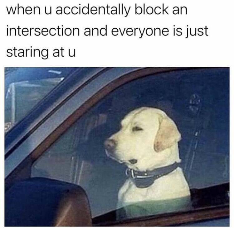 Dog - when u accidentally block an intersection and everyone is just staring at u