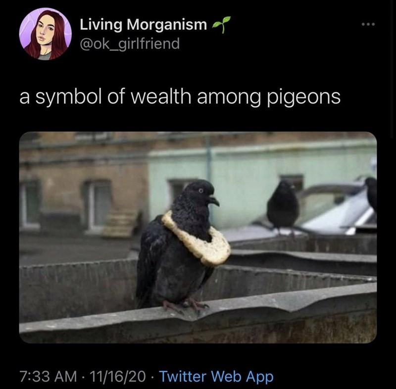 Photo caption - Living Morganism @ok_girlfriend a symbol of wealth among pigeons 7:33 AM · 11/16/20 · Twitter Web App