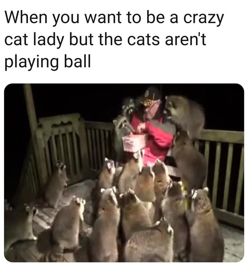 Canidae - When you want to be a crazy cat lady but the cats aren't playing ball