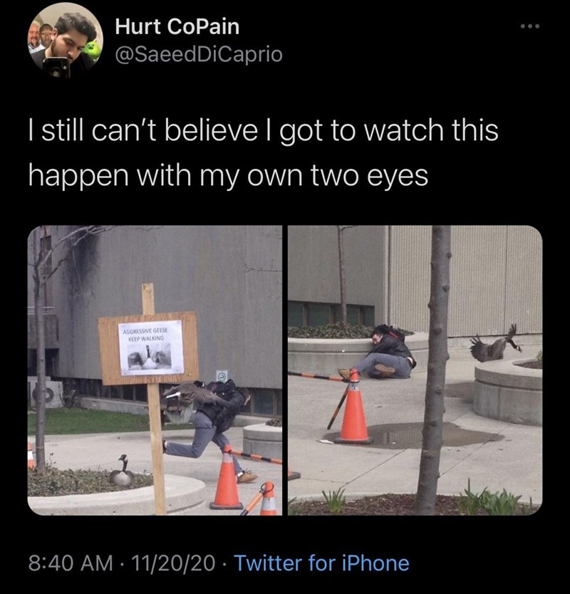 Adaptation - Hurt CoPain @SaeedDiCaprio I sill can't believe I got to watch this happen with my own two eyes AGGRESSIVE GEESE KEEP WALKING 8:40 AM · 11/20/20 · Twitter for iPhone