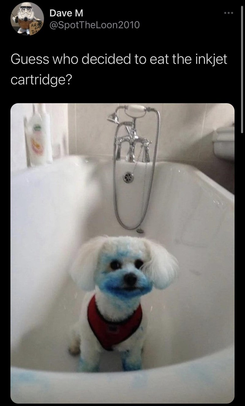 Bichon - Dave M ... @SpotTheLoon2010 ARN DA Guess who decided to eat the inkjet cartridge?