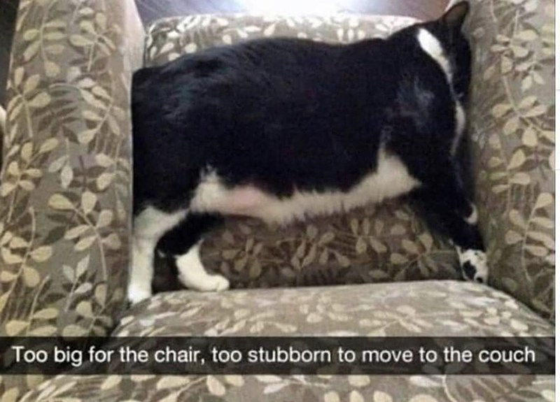 Mammal - Too big for the chair, too stubborn to move to the couch