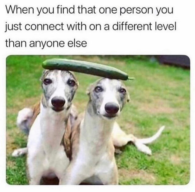 Dog - When you find that one person you just connect with on a different level than anyone else