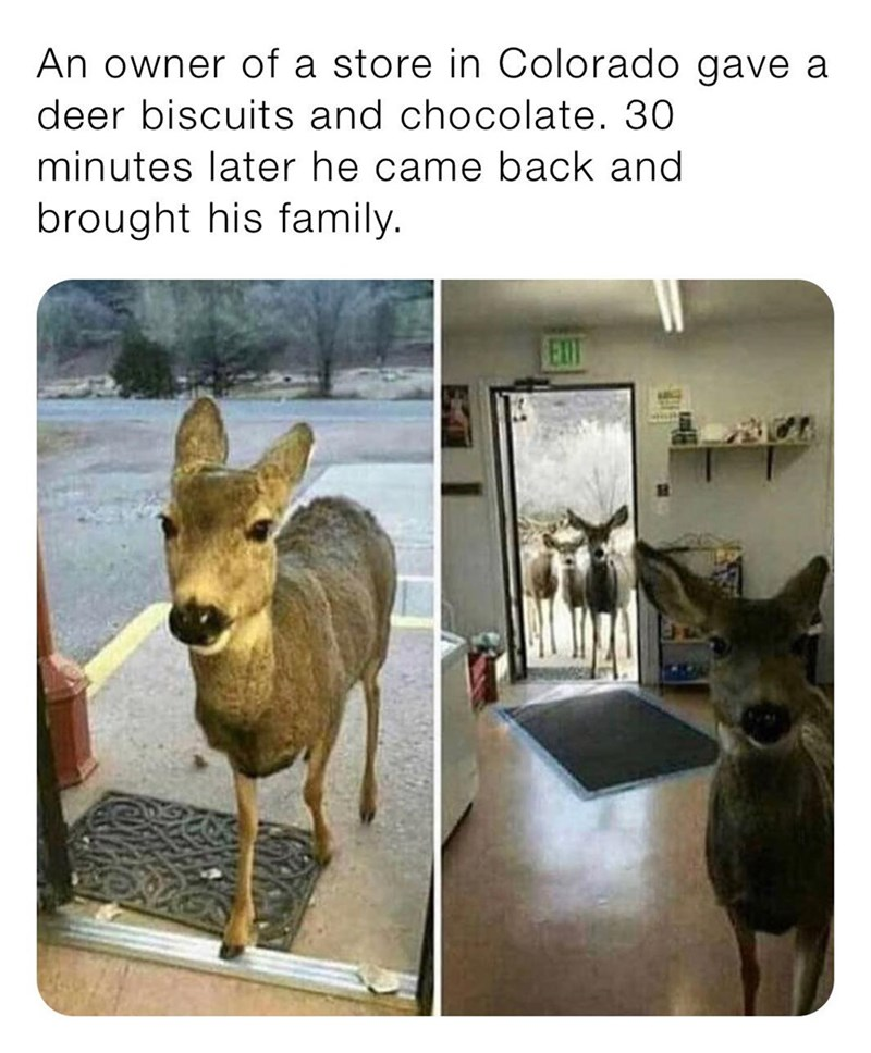 Deer - An owner of a store in Colorado gave a deer biscuits and chocolate. 30 minutes later he came back and brought his family. EXIT