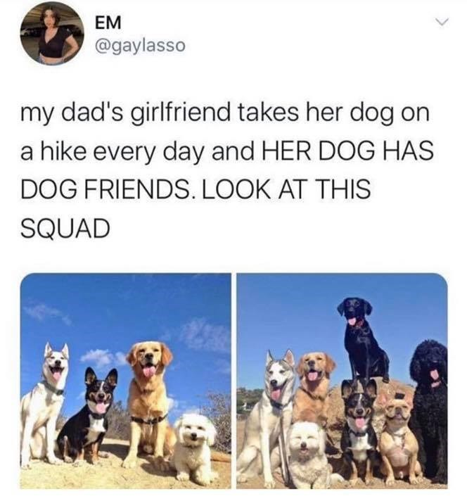Dog - EM @gaylasso my dad's girlfriend takes her dog on a hike every day and HER DOG HAS DOG FRIENDS. LOOK AT THIS SQUAD